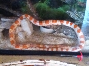 My snake Nando, in his representation of unity..